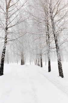 Schneebedeckte straße - die straße, die im winter mit schnee bedeckt ist.