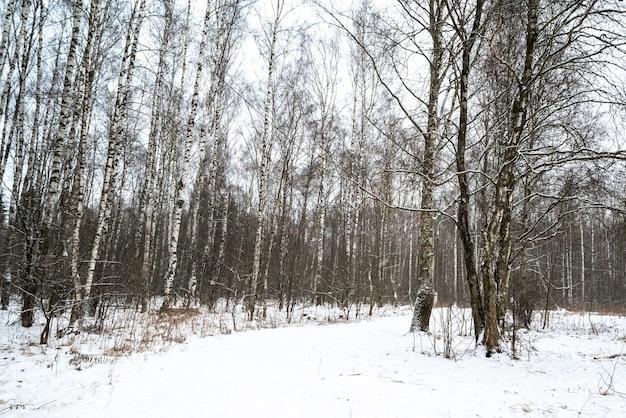 Schneebedeckte straße durch birkenhain-winterwaldlandschaft