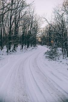 Schneebedeckte straße inmitten der bäume