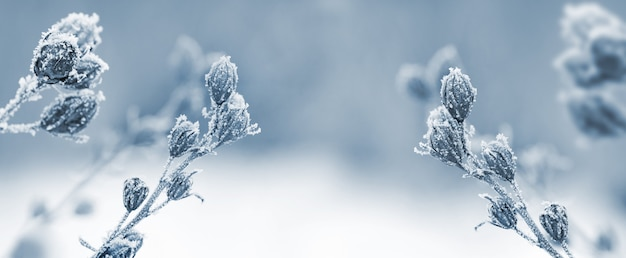 Schneebedeckte trockenpflanzen auf unscharfem hintergrund, weihnachts- und neujahrshintergrund