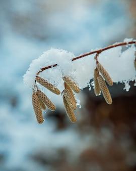 Schneebedeckte vegetation in pyrenäen
