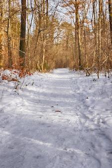 Schneebedeckte wegbäume im wald