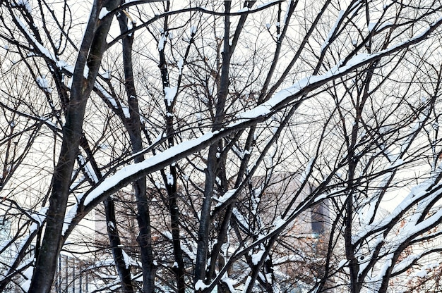 Schneebedeckte winterstraßenszene mit modernen gebäuden entlang in sapporo city