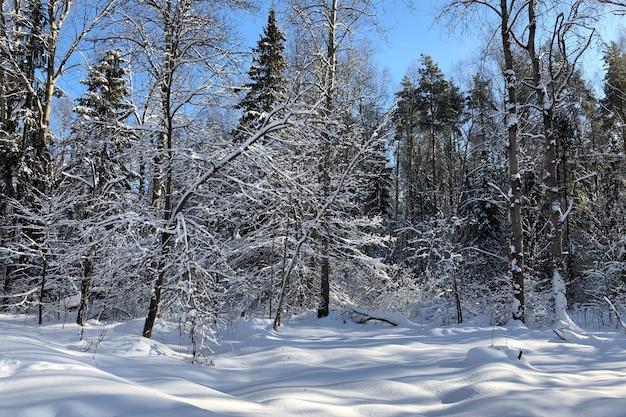 Schneebedeckte winterwaldlandschaft mit schneeverwehungen und mit schnee bedeckten bäumen