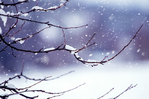 Schneebedeckter ast im winterwald