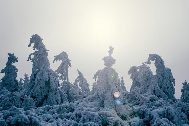 Schneebedeckter baum im schnee. dicker schnee auf bäumen