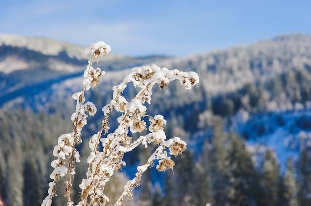 Schneebedeckter busch in den winterbergen