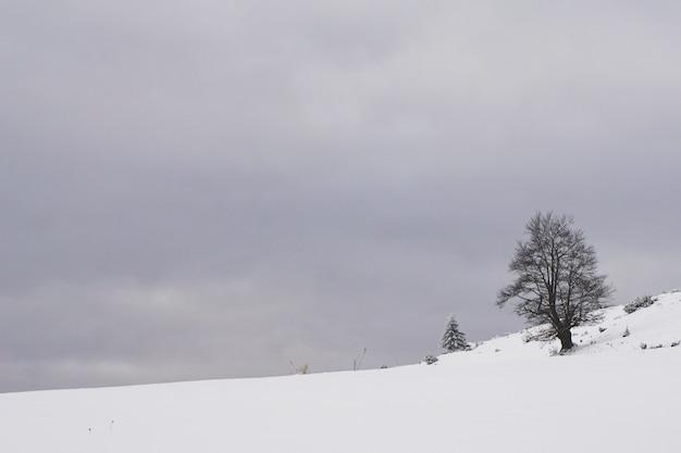 Schneebedeckter ländlicher bereich mit blattlosen bäumen in fundata, siebenbürgen, rumänien
