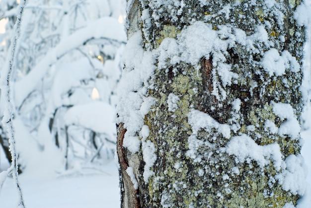 Schneebedeckter, moosiger baumstamm, vor dem hintergrund eines verschwommenen verschneiten winterwaldes