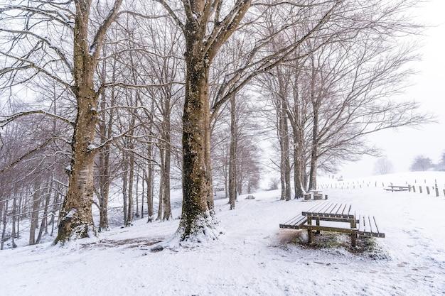Schneebedeckter sonnenaufgang am picknickplatz neben der zuflucht des berges aizkorri in gipuzkoa. schneelandschaft im winter schneit