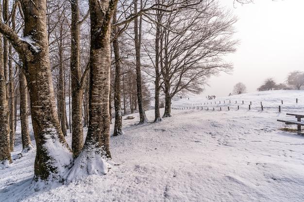 Schneebedeckter sonnenaufgang neben bäumen im picknickbereich neben der zuflucht des berges aizkorri in gipuzkoa. schneelandschaft im winter schneit