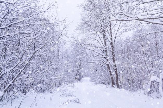 Schneebedeckter wald des winters im park. schneesturm im park, winterlandschaft