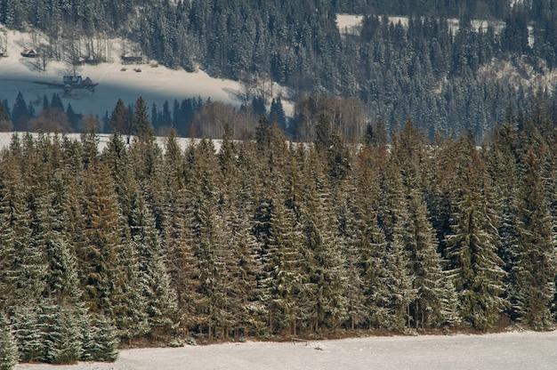 Schneebedeckter wald im winter