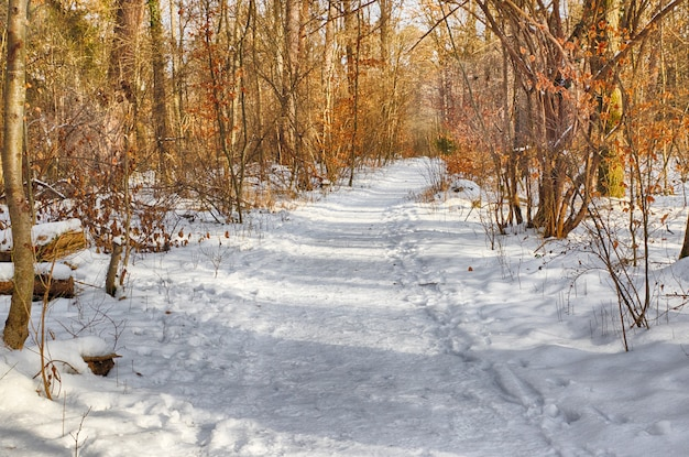 Schneebedeckter weg in mehrere bäume im wald