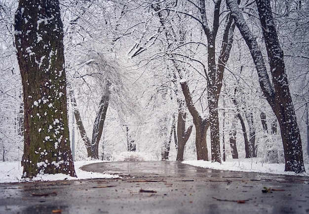 Schneebedeckter winterpark mit matsch auf dem weg