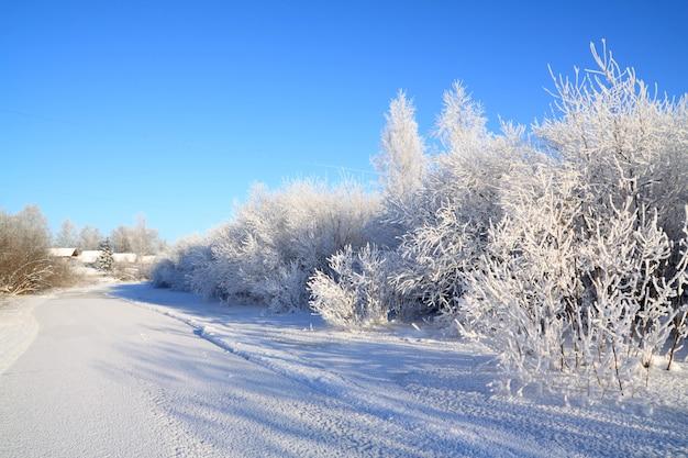 Schneebüsche an der küste fluss