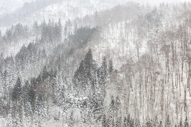 Schneefälle mit wald