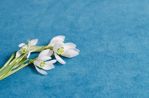 Schneeglöckchen blüht blumenstrauß auf blauem gewebe