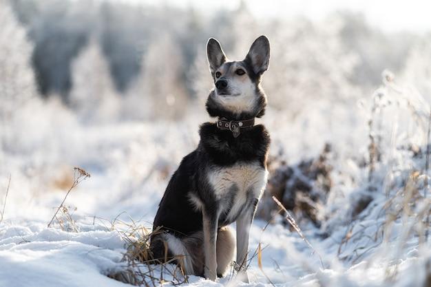 Schneehund. schwarzer hund mit schnee