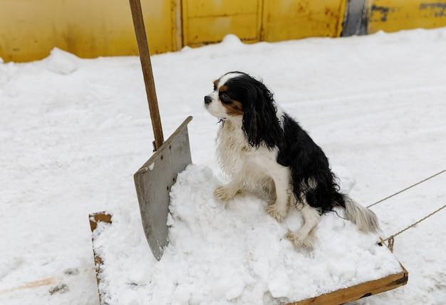 Schneeräumung mit einer schaufel mit einem schlitten in der einfahrt in der nähe der garagen.