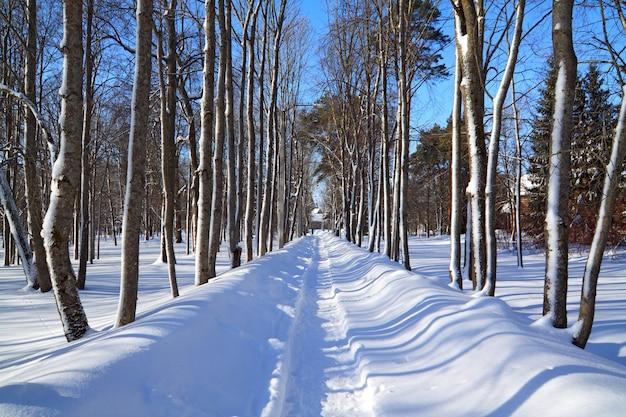 Schneespur im winterpark