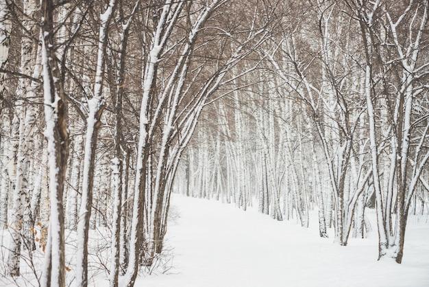 Schneetunnel zwischen bäumen in parklandschaft