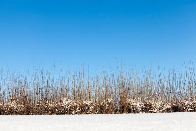 Schneeverwehungen und pflanzen im winter, tiefschneeverwehungen und pflanzen nach dem letzten schneefall, kaltes winterwetter nach dem schneefall mit pflanzen