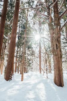 Schneewald am togakushi-schrein, japan