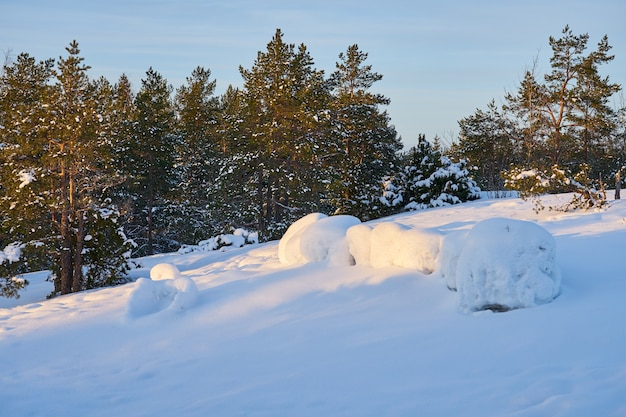 Schneewald an einem frostigen abend bei sonnenuntergang.