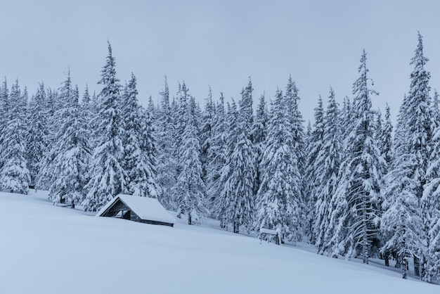 Schneewald in den karpaten. ein kleines gemütliches holzhaus mit schnee bedeckt. das konzept von frieden und wintererholung in den bergen. frohes neues jahr