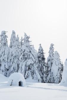 Schneeweißer winter im fichtenwald. iglu aus dem schnee, um touristen bei der winterwanderung zu schützen