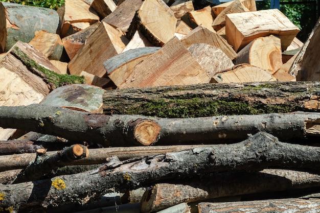 Schneiden sie eichen- und buchenbäume für die ernte für den winter