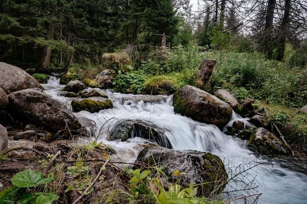 Schneller fluss fließt in einem nadelwald zwischen moosigen steinen