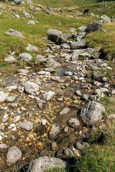 Schneller fluss in der nähe von schönem wald in bucegi-bergen, rumänien