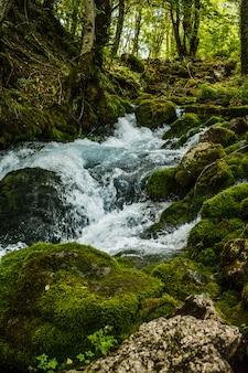 Schneller gebirgsbach in wäldern von montenegro