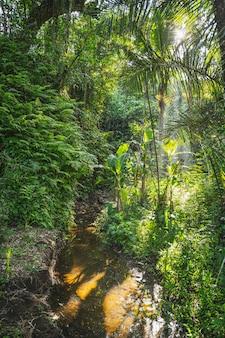 Schneller grüner strom, der im tropischen dschungel läuft, sonne scheint durch die palmen stockfoto