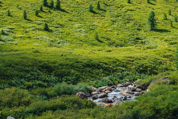 Schneller strom des quellwassers nahe grünem bergabhang am sonnigen tag. reiche hochlandflora. erstaunliche gebirgsvegetation nahe schnellem gebirgsbach. wunderbare landschaft. sonnige malerische landschaft.