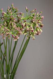 Schnittlauch oder allium schoenoprasum blühende blumen in glasvase