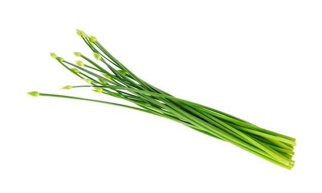 Schnittlauchblume oder chinesischer schnittlauch isoliert auf weißem hintergrund