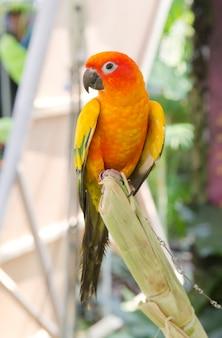 Schön vom bunten papageienvogel