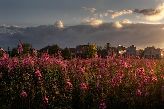 Schöne abendlandschaft bei sonnenuntergang mit einem feld der blühenden zypresse mit einem dorf am horizont