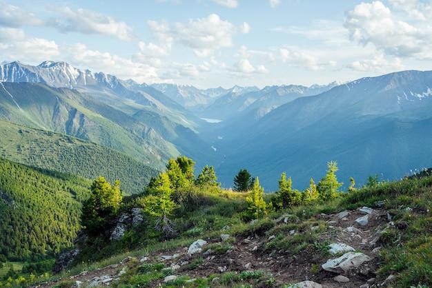 Schöne alpine landschaft mit kleinen nadelbäumen auf felsen