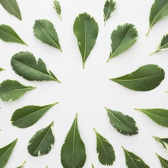 Schöne anordnung für grünblätter über weißem hintergrund