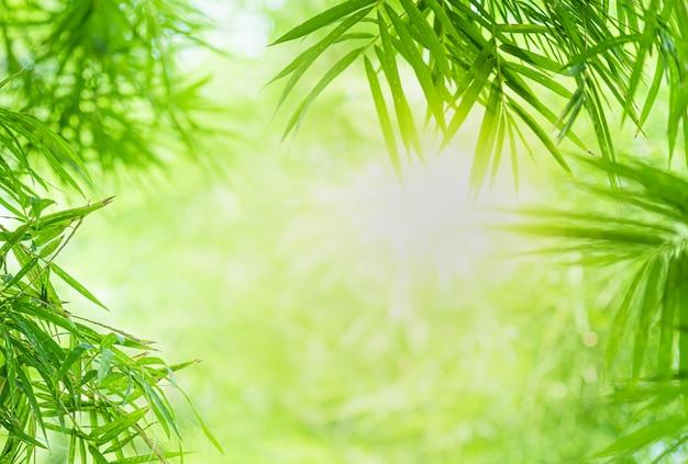 Schöne ansicht der nahaufnahme des grünen bambusblattes der natur auf grünem unscharfem hintergrund mit sonnenlicht und kopienraum.