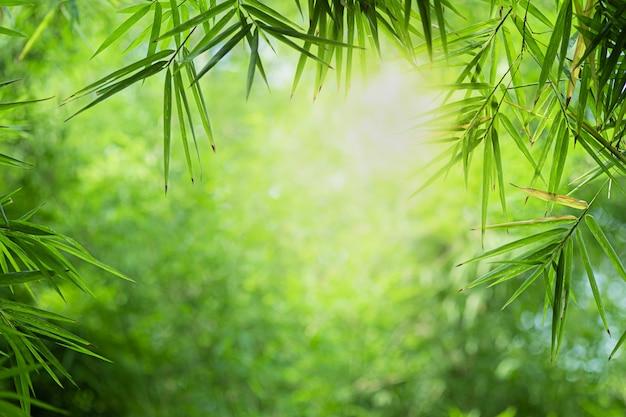 Schöne ansicht der nahaufnahme des naturgrün-bambusblattes auf grün verwischte hintergrund mit sonnenlicht und copyspace