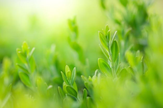 Schöne ansicht der nahaufnahme des naturgrünblattes auf dem grün verwischt