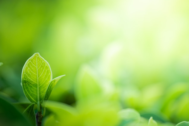 Schöne ansicht der nahaufnahme des naturgrüns verlässt auf unscharfem grünbaumhintergrund mit gartenpark des sonnenlichts öffentlich. es ist landschaftsökologie und kopienraum für tapete und hintergrund.