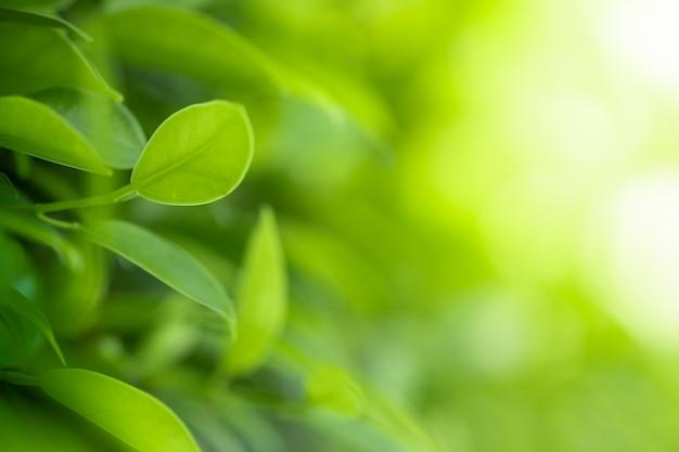 Schöne ansicht der nahen ansicht der grünen blätter der natur auf unscharfem grünbaumhintergrund mit sonnenlicht im öffentlichen gartenpark.