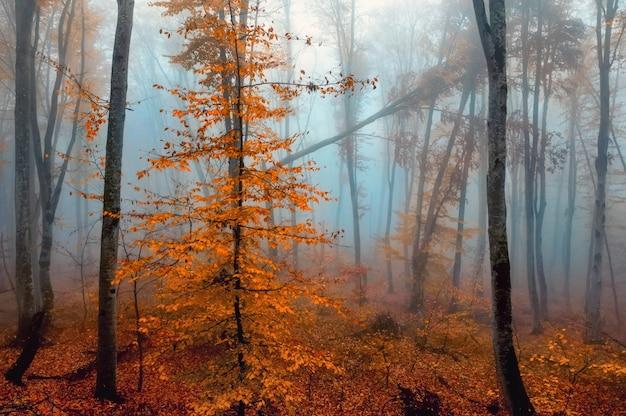 Schöne ansicht des nebligen waldes mit goldenen blättern in den herbstbergen