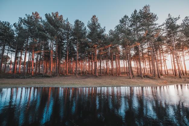 Schöne ansicht des spiegelbildes der bäume in einem see, der in oostkapelle, niederlande gefangen genommen wird